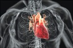 Fasting For Heart Conditions