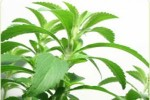 The Healthy Benefits Of  The Amazing Stevia